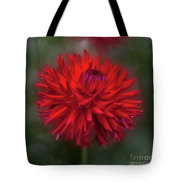 Dahlia 'hollyhill Miss Scarlet' Tote Bag