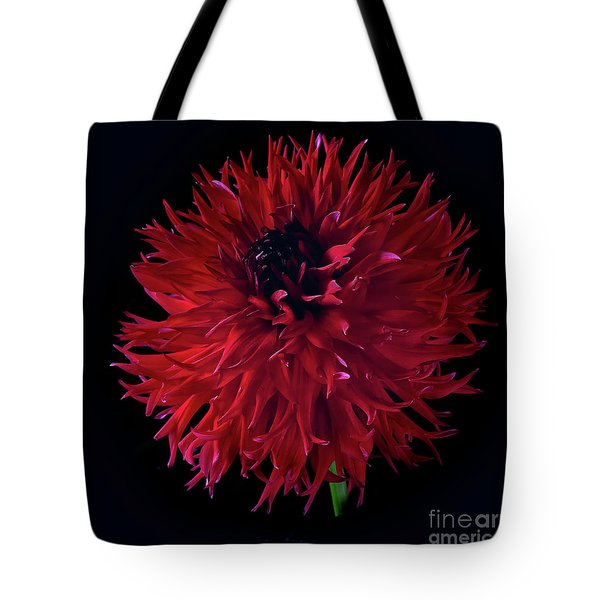 Dahlia 'holyhill Miss Scarlet' Tote Bag