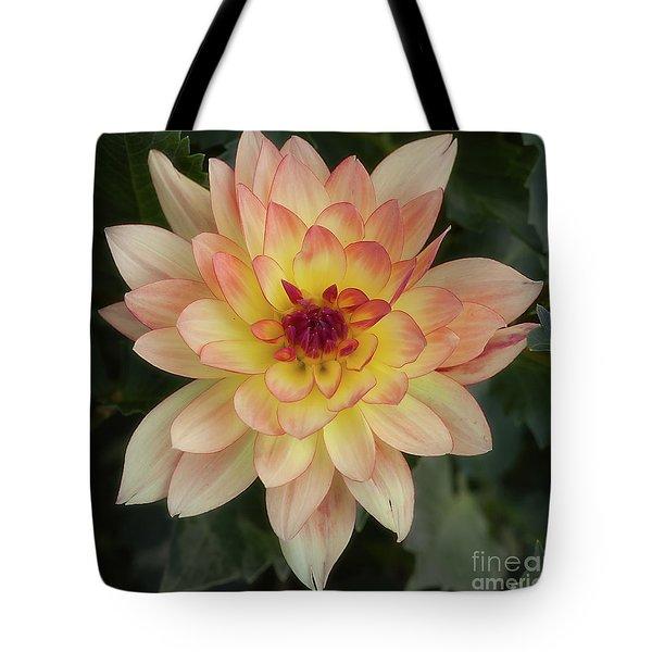 Dahlia 'keith H.' Tote Bag