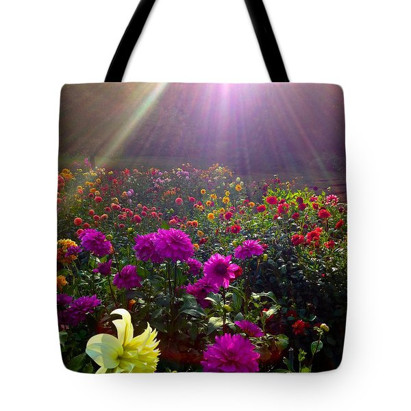 Dahlias Kissed By Sun-rays  Tote Bag