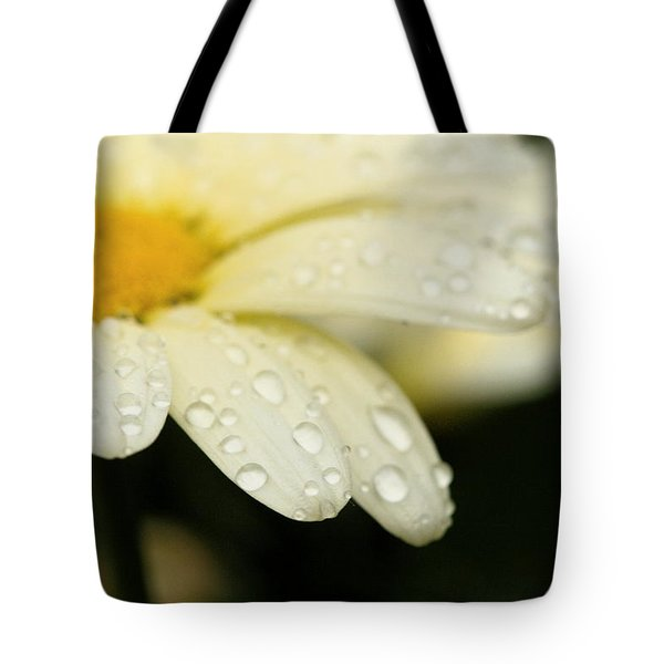 Tote Bag featuring the photograph Daisy In Spring by Angela Rath