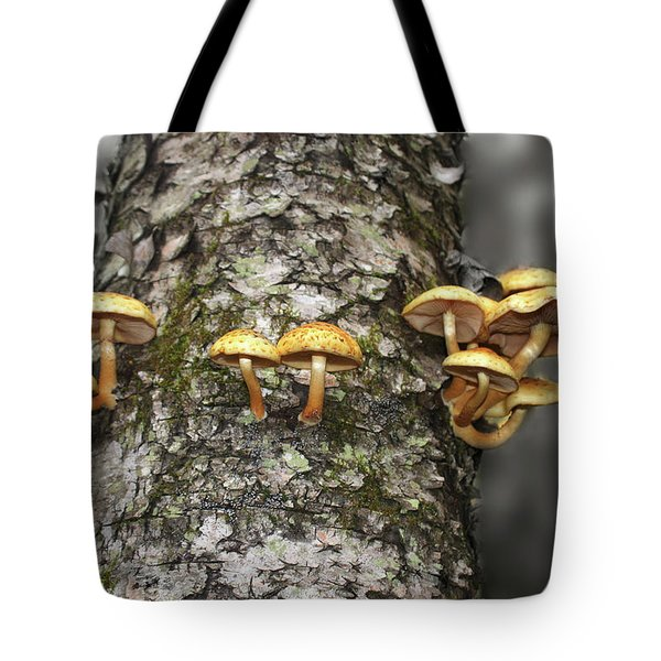 Tote Bag featuring the photograph Dance Around The Ancient Birch by Wayne King