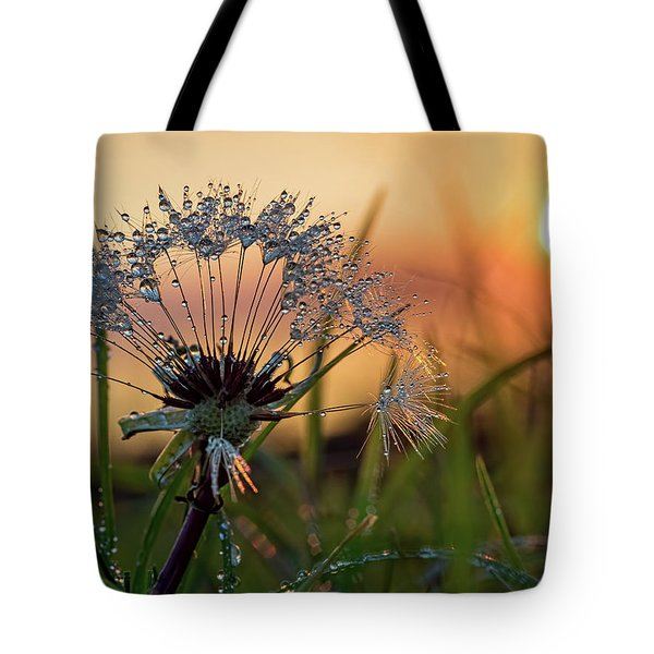 Dandelion Sunset 2 Tote Bag