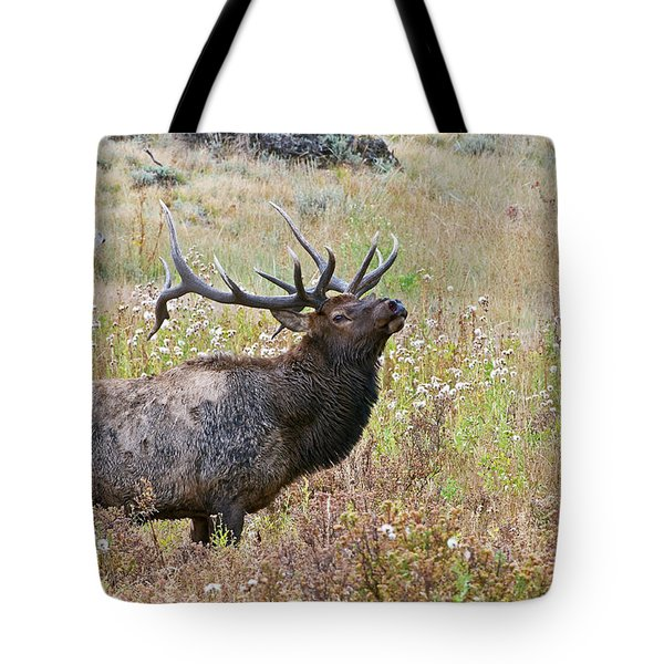 Tote Bag featuring the photograph Dapper Dan by Gary Lengyel