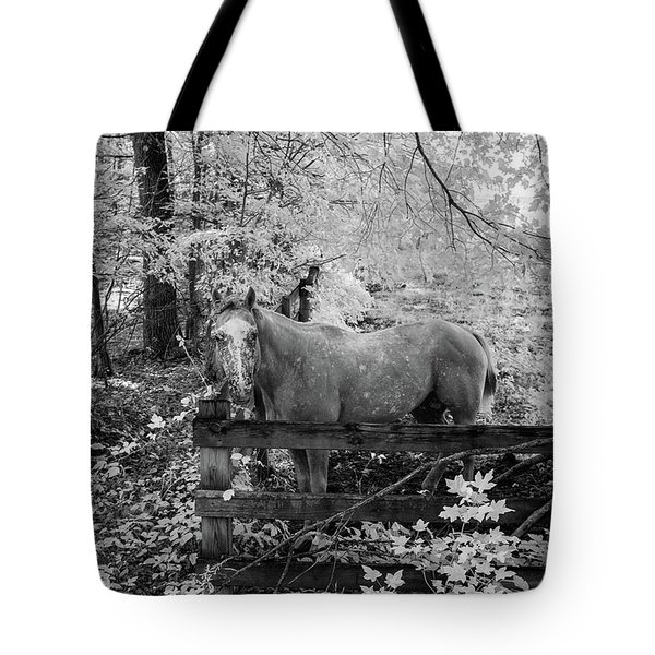 Dappled Face Horse II Tote Bag