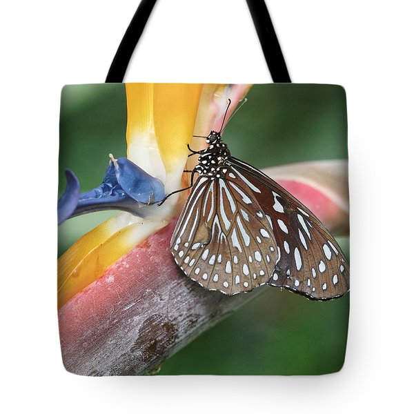 Tote Bag featuring the photograph Dark Blue Tiger Butterfly - 1 by Paul Gulliver