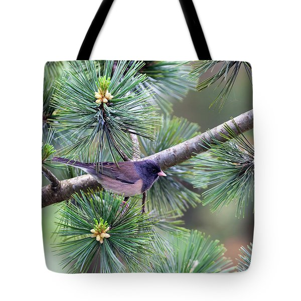 Dark-eyed Junco On A Pine Tree Tote Bag by David Gn