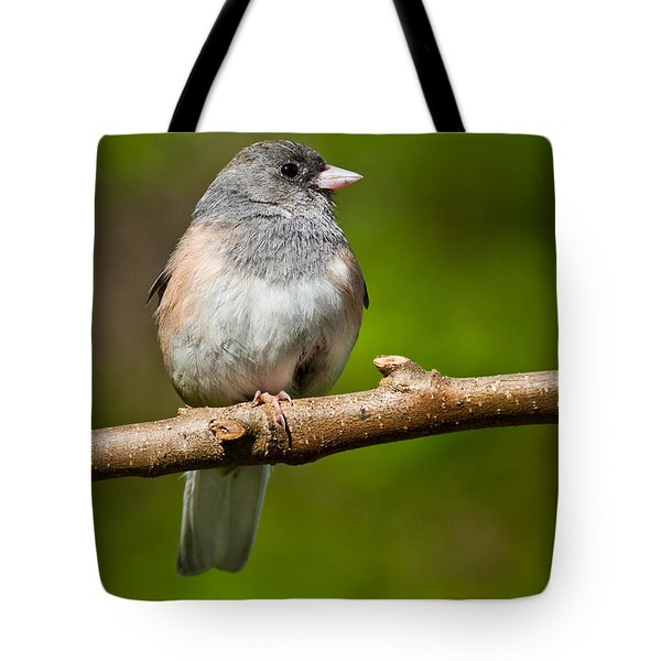 Dark Eyed Junco Perched On A Branch Tote Bag
