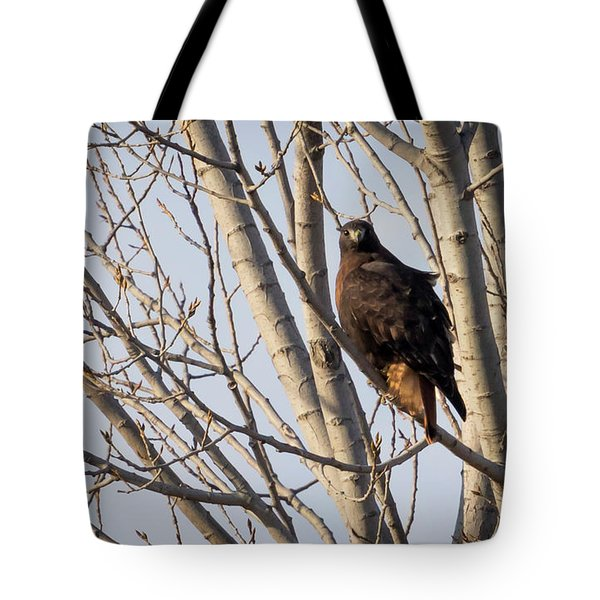 Tote Bag featuring the photograph Dark-morph Western Red-tailed Hawks by Ricky L Jones