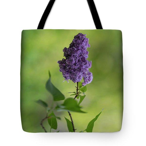 Dark Violet Lilac Tote Bag