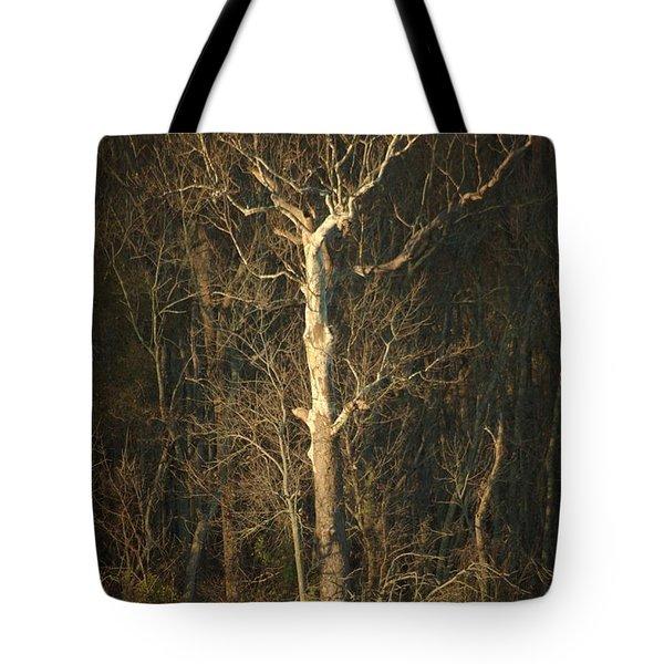 Day Break Tree Tote Bag