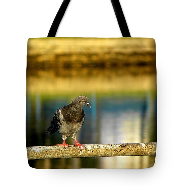 Daytona Beach Pigeon Tote Bag by Chris Mercer
