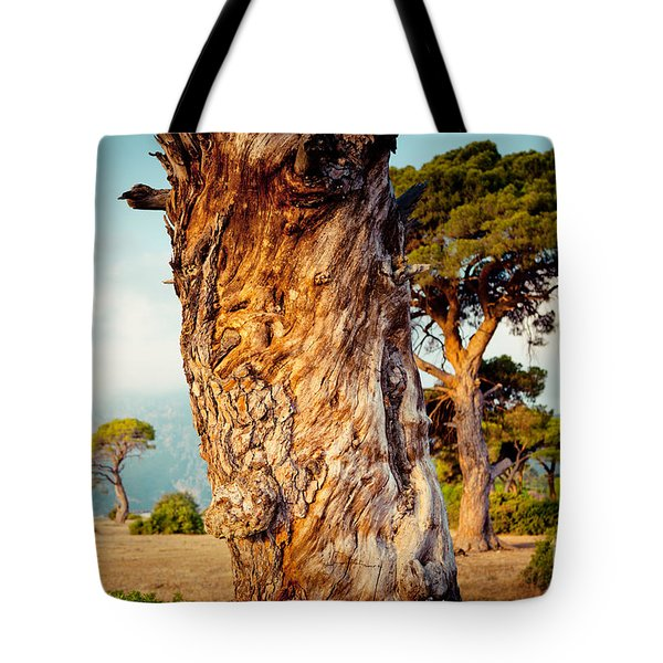 Dead Tree And Forest  Tote Bag