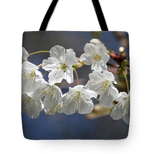 Deep Blue  Cherry Blossom Tote Bag