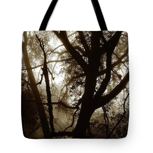 Tote Bag featuring the photograph Deep In The Sequoia National Forest by Ayasha Loya