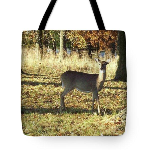 Deer At Valley Forge Tote Bag