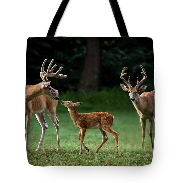 Tote Bag featuring the photograph Deer Family Portrait by Andrea Silies