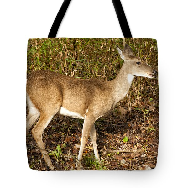 Deer In Morning Ligh Tote Bag