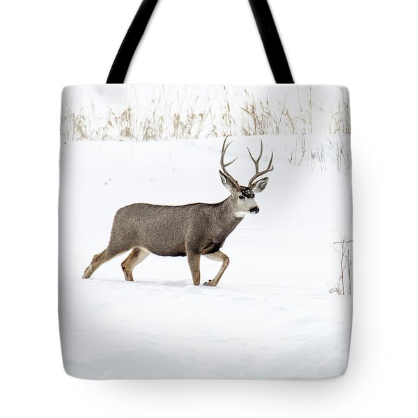 Tote Bag featuring the photograph Deer In The Snow by Rebecca Margraf