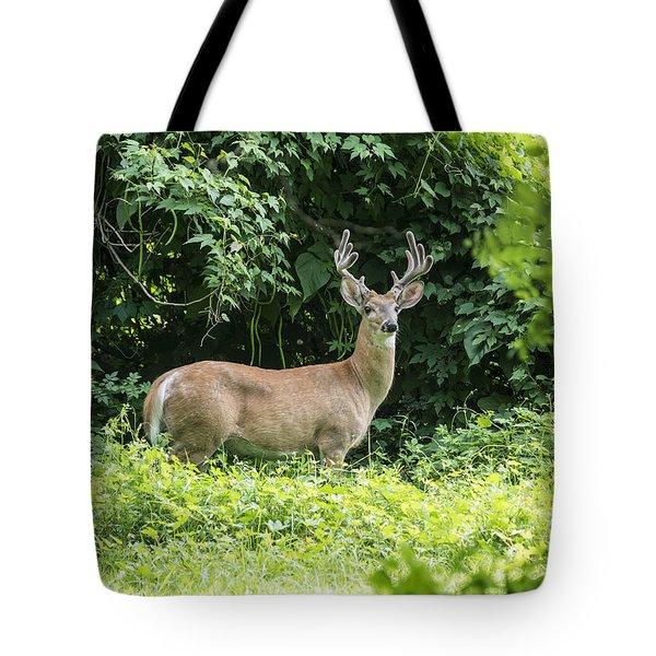 Eastern White Tail Deer Tote Bag