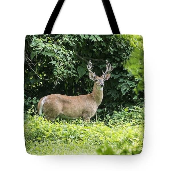 Eastern White Tail Deer Tote Bag