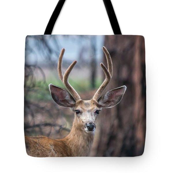 Deer Stare Tote Bag