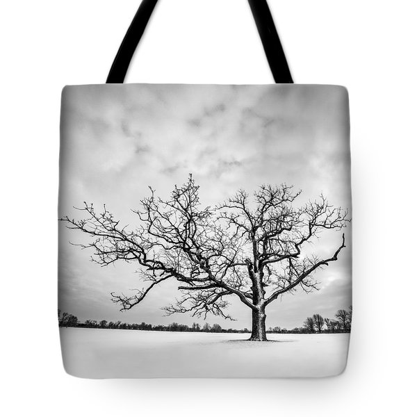 Delaware Park Winter Oak - Square Tote Bag by Chris Bordeleau