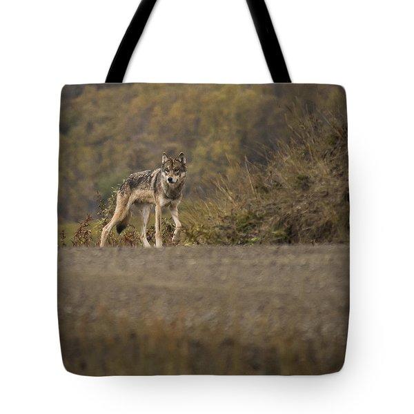 Denali Park Wolf Tote Bag