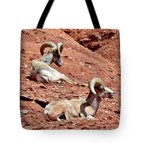 Tote Bag featuring the photograph Desert Big Horn Sheep Capitol Reef National Park Utah by Deborah Moen
