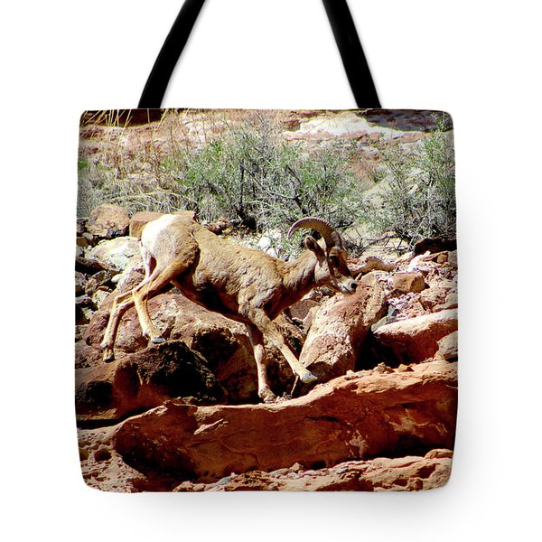 Desert Bighorn Ram Walking The Ledge Tote Bag