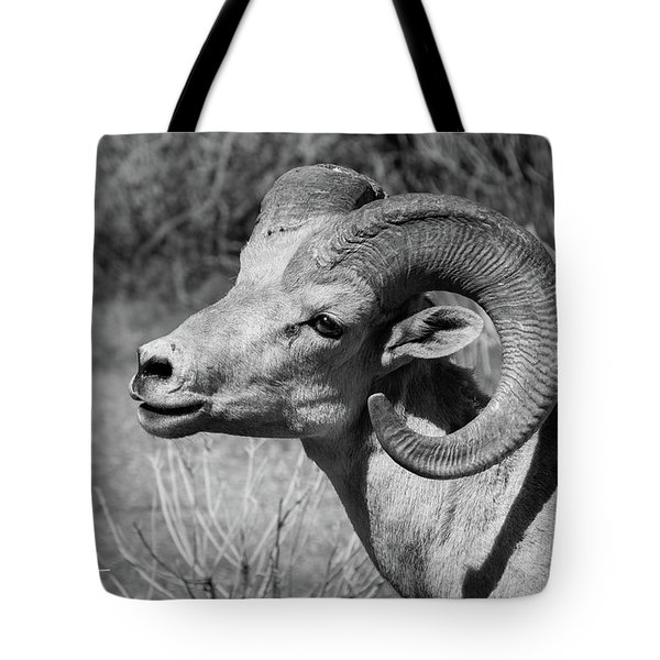 Tote Bag featuring the photograph Desert Bighorn by T A Davies