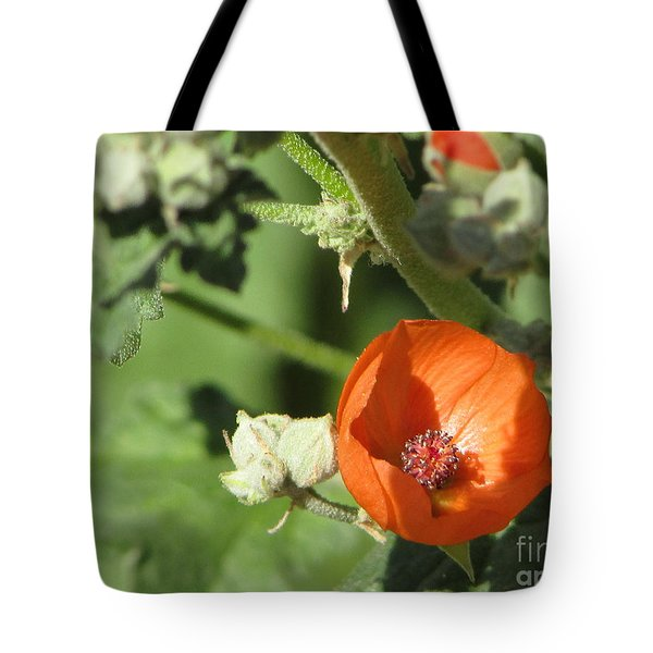 Desert Globemallow Bloom 215 Tote Bag