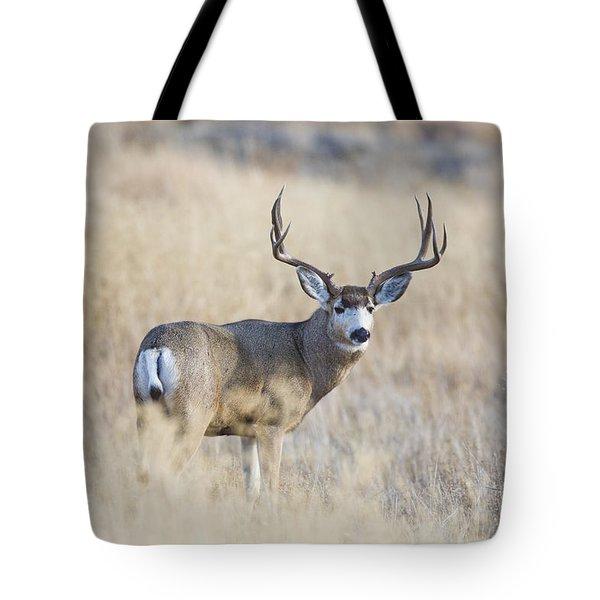 Desert King Tote Bag