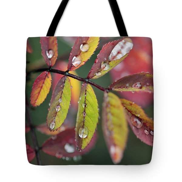 Dew On Wild Rose Leaves In Fall Tote Bag by Darwin Wiggett