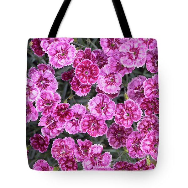 Tote Bag featuring the photograph Dianthus Gold Fleck by Tim Gainey