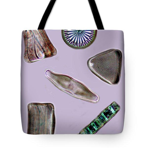 Diatoms Tote Bag by David Salter