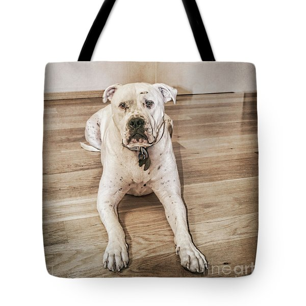 Tote Bag featuring the photograph Did I Do Something Wrong? by Elaine Teague