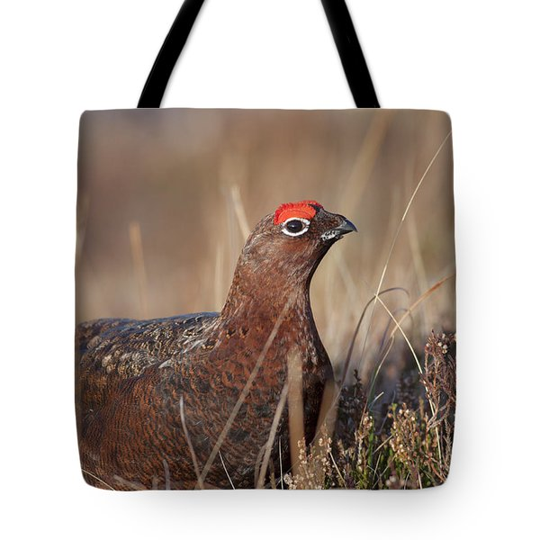 Tote Bag featuring the photograph Did I Overdo It With The Eye Shadow? by Karen Van Der Zijden