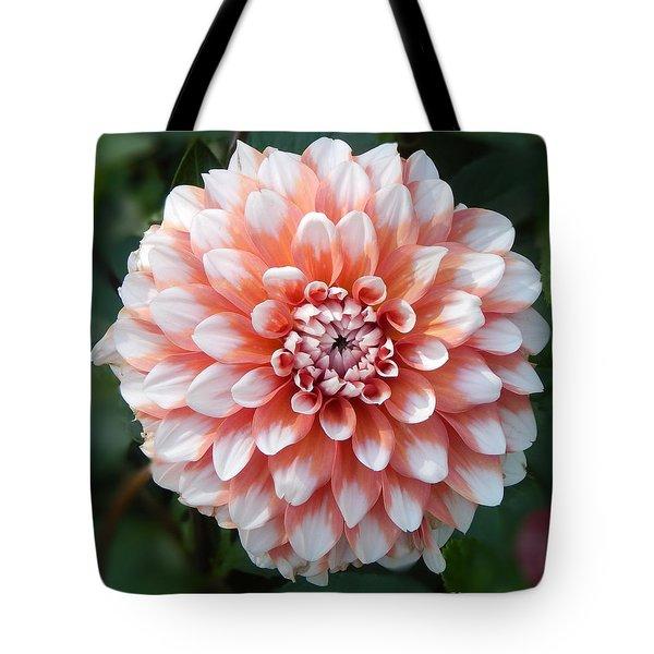 Dahlia Flower- Soft Pink Tones Tote Bag