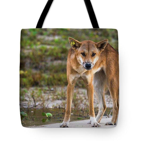 Dingo On 75 Mile Beach, Tote Bag