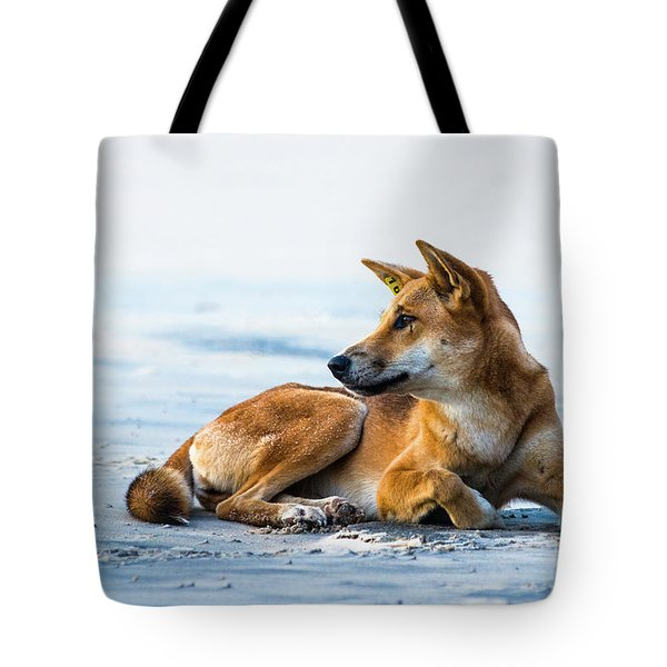 Dingo On Fraser Island Beach Tote Bag