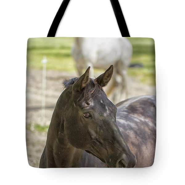 Tote Bag featuring the photograph Divine Equines by Constantine Gregory
