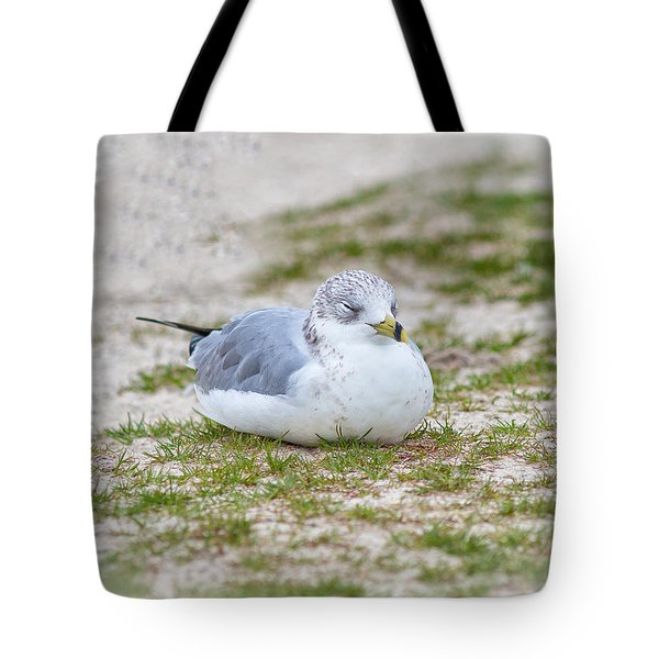 Tote Bag featuring the photograph Do Not Disturb The Gull by John M Bailey