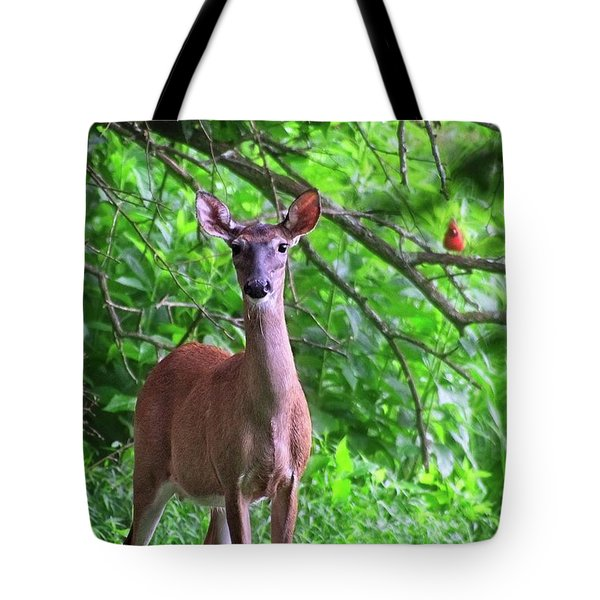 Doe And Cardinal Tote Bag