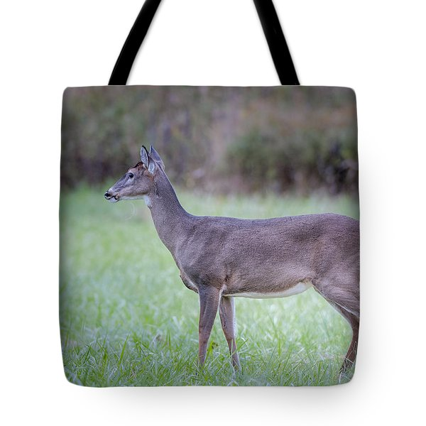 Tote Bag featuring the photograph Doe In Cades Cove by Tyson Smith
