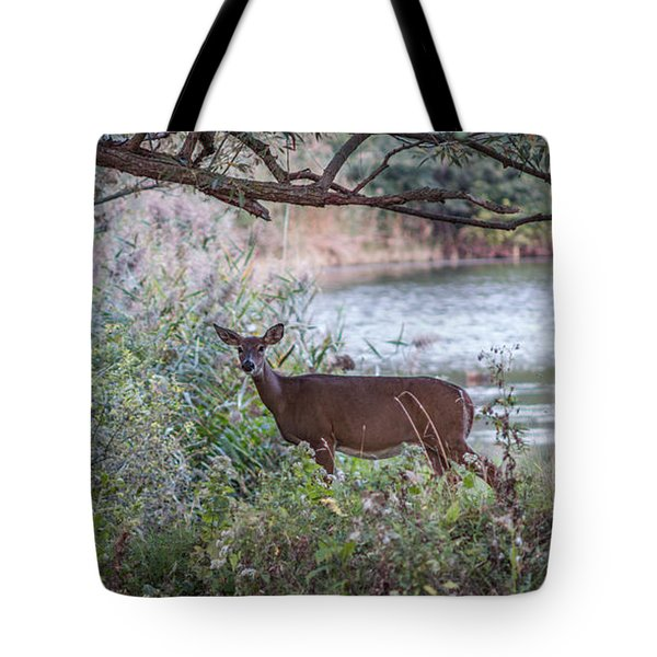 Doe Under Arching Branches Tote Bag by Chris Bordeleau