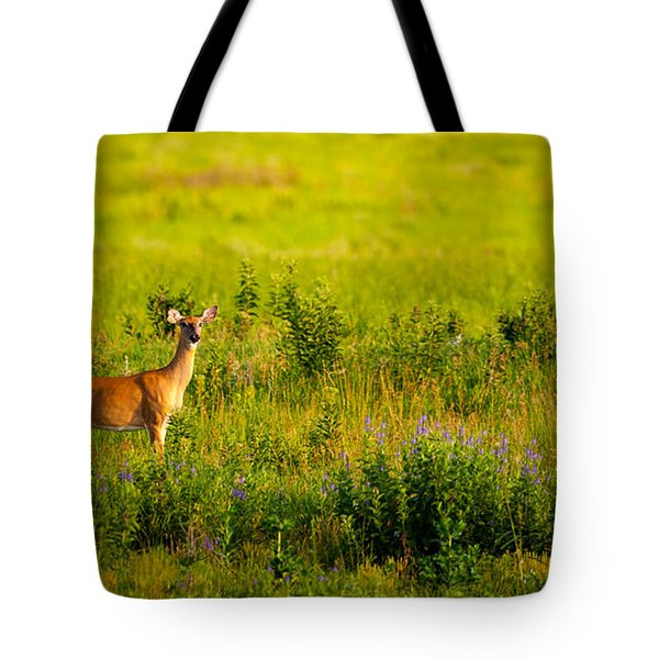 Tote Bag featuring the photograph Whitetail Doe In Prairie Clover by Jeff Phillippi