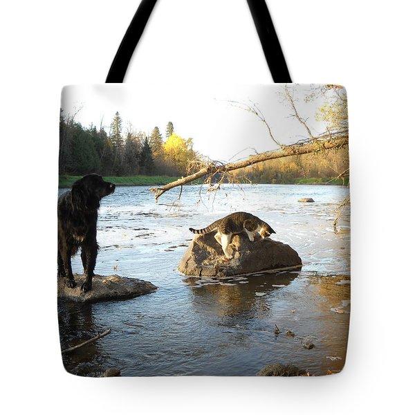 Dog And Cat Exploring Rocks Tote Bag