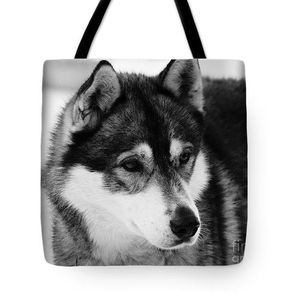 Dog - Monochrome 3 Tote Bag