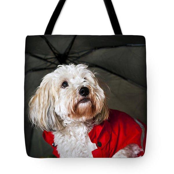 Dog Under Umbrella Tote Bag by Elena Elisseeva